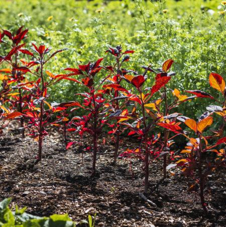 Combe Grove In-Season Produce