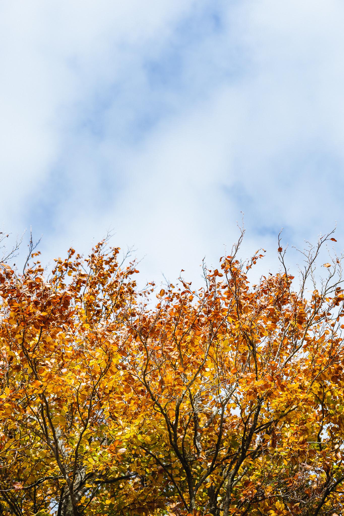 Combe_Grove_Bath_Wellness_Walk_Space_to_Breathe_Autumn