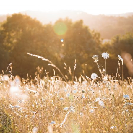 Combe Grove Wildflower meadows